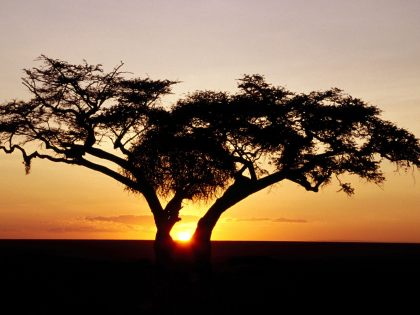 african kenya sunrise